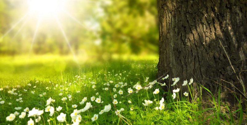 Environmental awareness actions for your employees